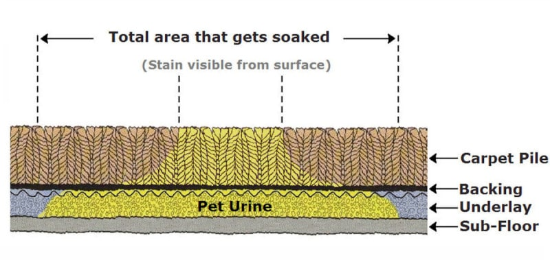 Urine and Odour Treatments - How pet urine spreads below the surface